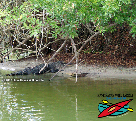 Have kayak will paddle where the paddlin 39 is easy for Tenoroc fish management area